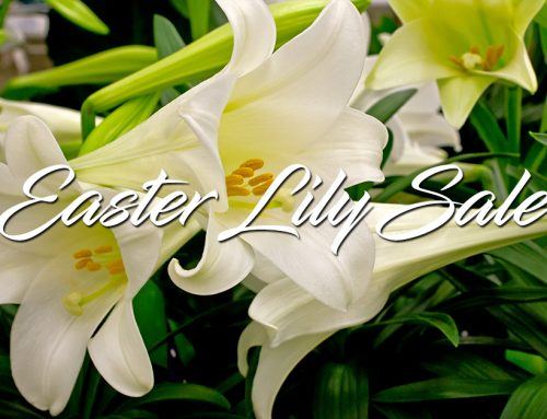 Easter Lily Sale